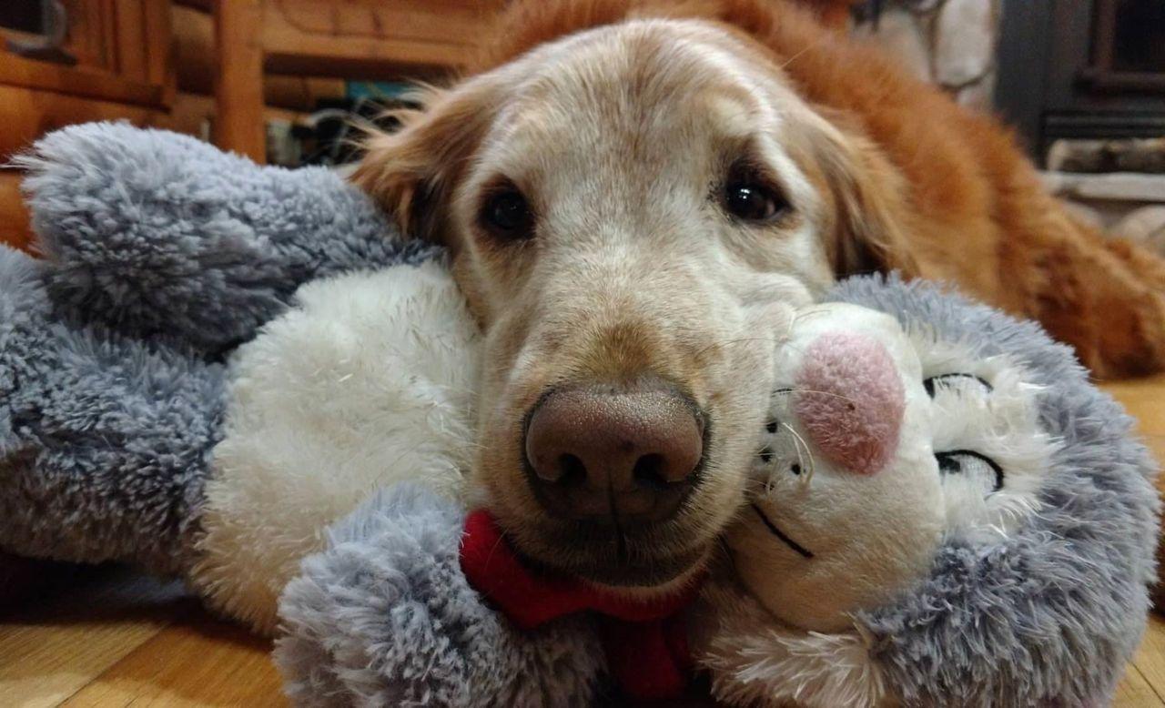 Scientists take a peek behind those sad puppy dog eyes ...